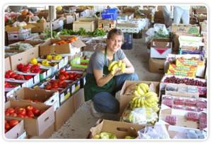 glaser organic farm - farmers market